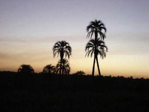 La vida entre palmeras en Entre Rios