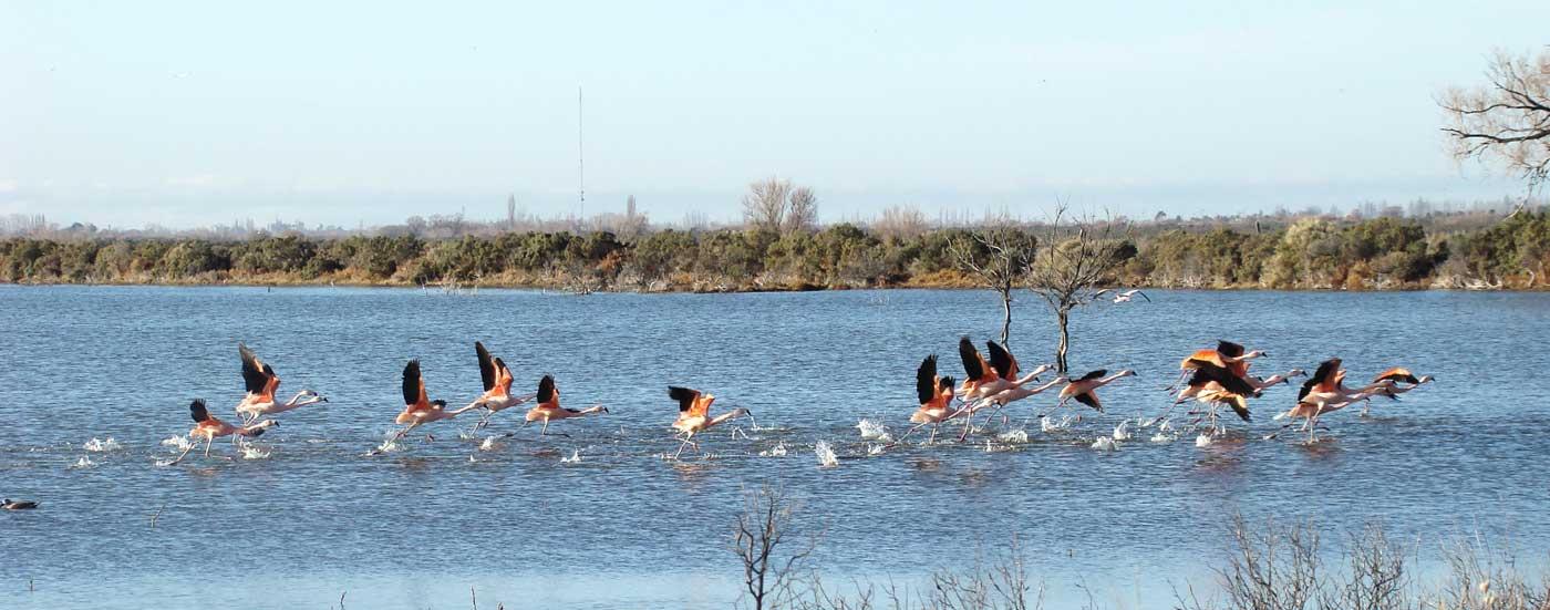 Laguna del Ornitólogo, Chubut