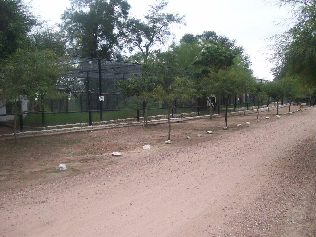 Camino al Zoo de Roque Saenz Peña