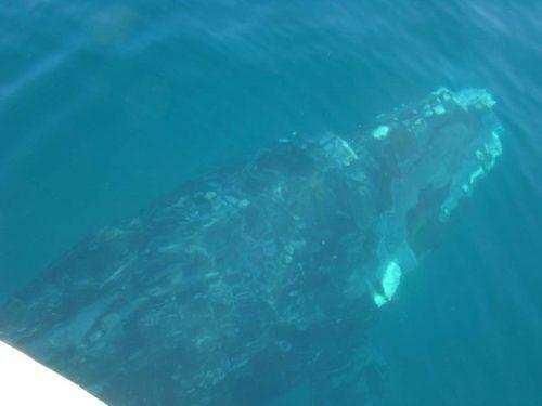 Comienza la vigila de Ballenas en Chubut