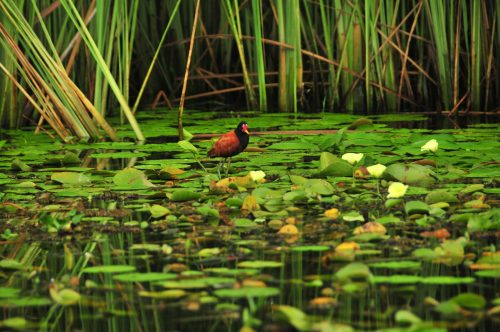 Turismo de observación de aves en Corrientes