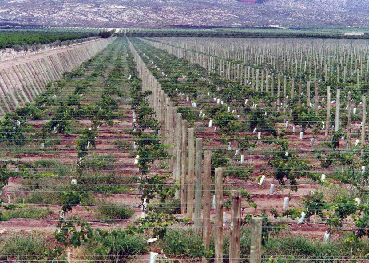 Vinos y bodegas de chilecito tripin argentina for Bodegas de jardin chile