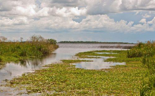 Nace el nuevo Parque Nacional Iberá, la mayor reserva natural del país
