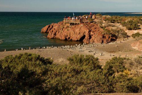 Las mejores Fotos de Punta Tombo