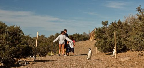 Punta Tombo dio comienzo a la temporada de avistaje de pingüinos 2018