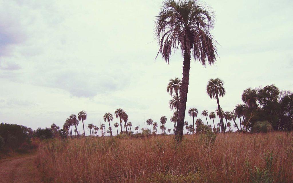 Parque Nacional Mburucuyá - Corrientes - foto: Mara Broman - www.parquesnacionales.gob.ar