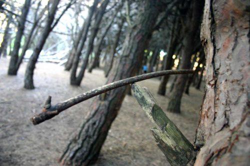 El místico Bosque Energético de Miramar