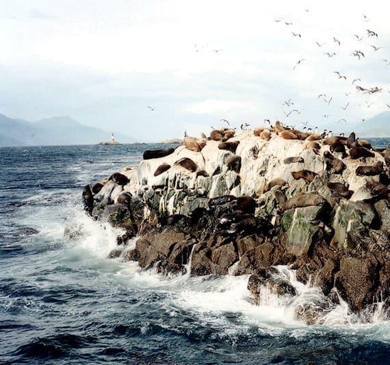 Isla de Lobos en Ushuaia