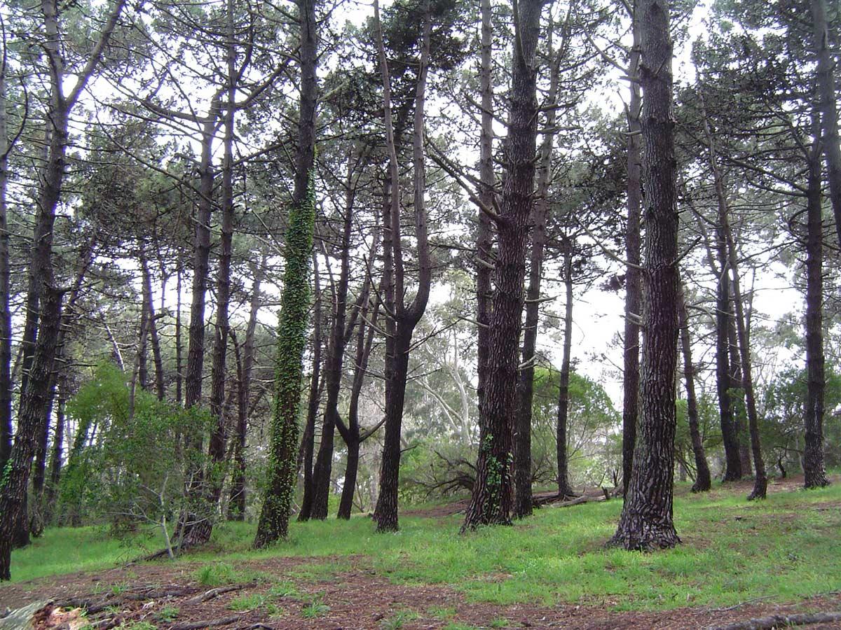 Reserva pinar norte la reserva forestal de gesell for Temperatura actual en villa gesell