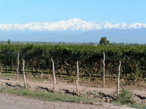 Mendoza, vino y montañas
