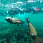 Buceo con lobos marinos en Puerto Madryn