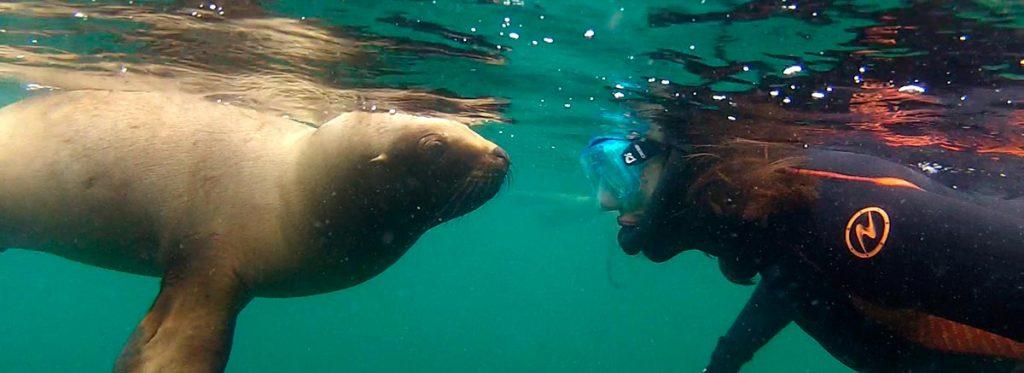Snorkeling con lobos marinos, Puerto Madryn