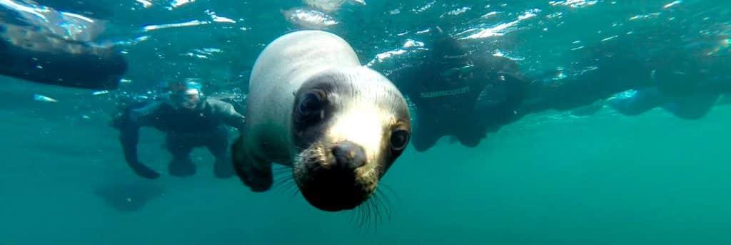 Snorkeling con lobos marinos en Puerto Madryn