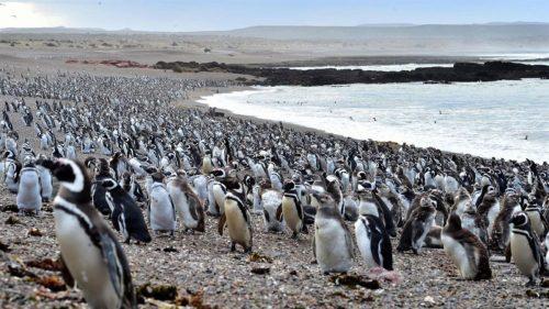 Comienza la temporada de Pingüinos en Tombo