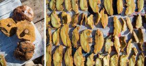 Cosecha de Hongos de pino.