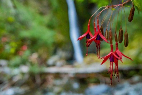 Los colores de la primavera en los Parques Nacionales