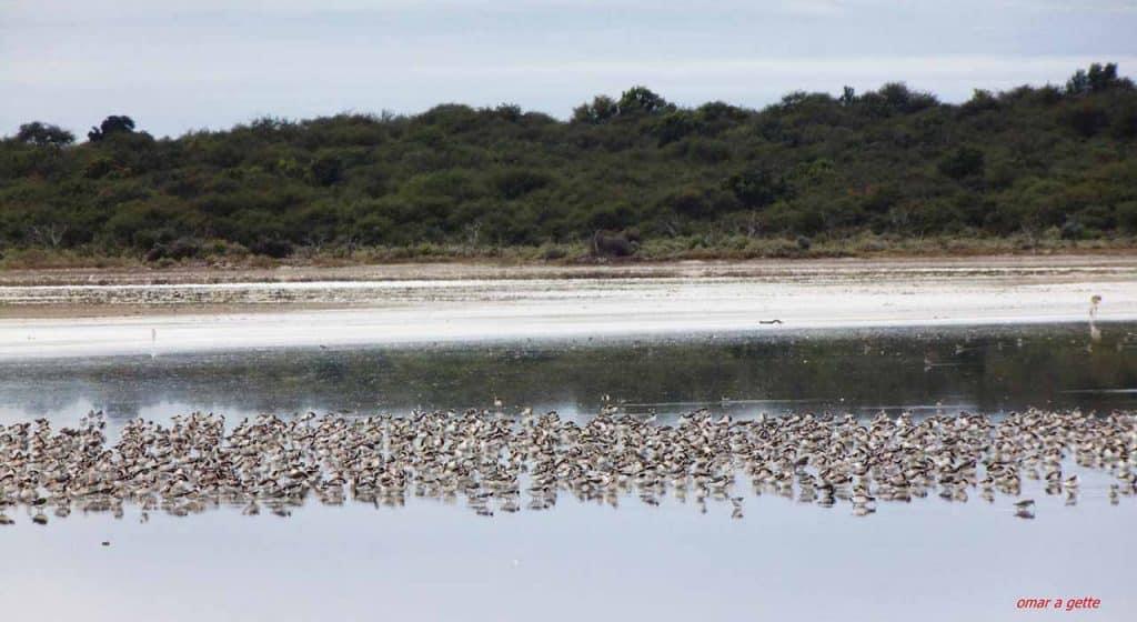 Area Protegida Laguna Guatrache, La Pampa - Foto: Omar Antonio Gette